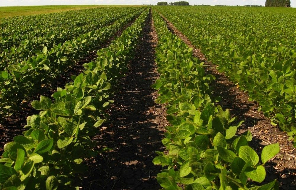 President Trump's misguided trade war is hitting Minnesota's farmers – American Experiment